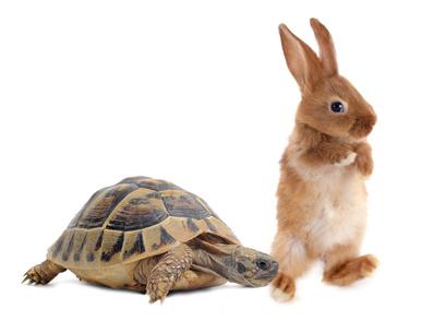le lèvre et la tortue